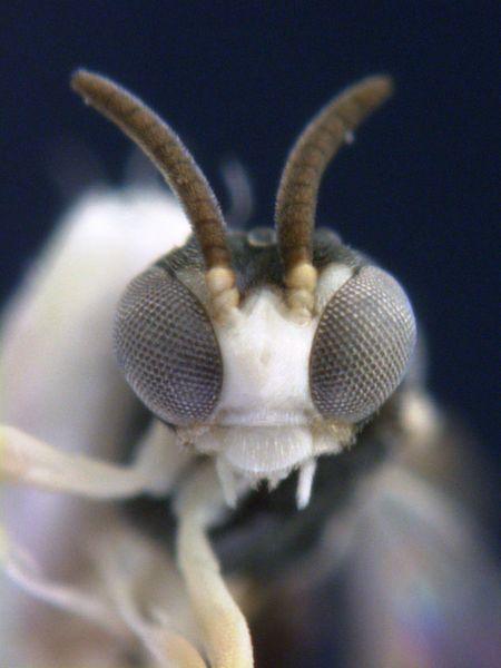 Penemuan Hewan Terbaru http://asalasah.blogspot.com/2012/11/penemuan-baru-hewan-hewan-yang.html