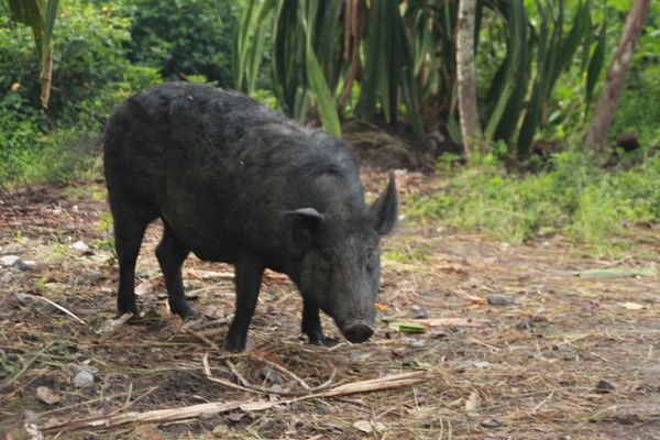 Apa sih Binatang Paling Mahal di Papua?