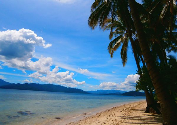Rayuan pohon kelapa di pantai klara, lung