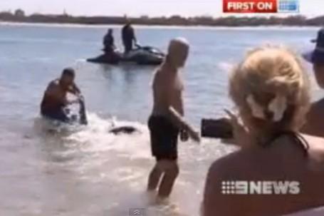 Busyet! Kakek Lawan Ikan Hiu di Australia