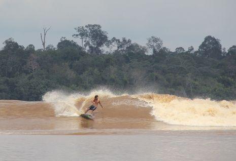 Saksikan! Pemecahan Rekor Berselancar di Gelombang Bono, Riau