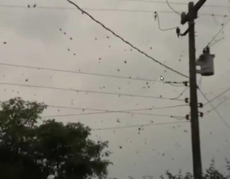 Aneh Tapi Nyata, Hujan Laba-laba Terjadi di Brazil