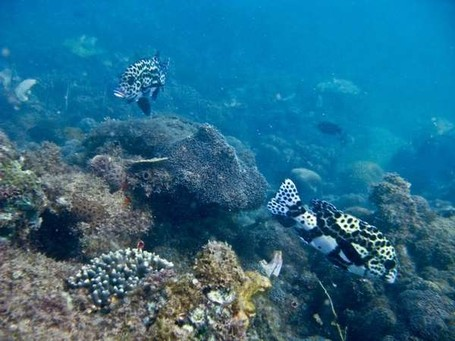 Panorama bawah laut Makassar