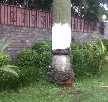 Ini Dia Lokasi Kecelakaan Ustad Uje di Pondok Indah