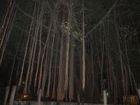 Ini dia pohon beringin yang diduga paling seram di Jeruk Purut. Babe Ook tidak akan pernah mau mengajak wisatawan untuk uji nyali di sini. Saya tidak berani menaruh orang di sini, risikonya tinggi, ucap Babe Ook (Afif/detikTravel)
