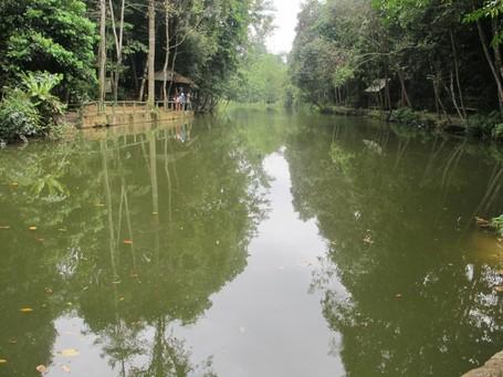 Ada Ikan Arwana Raksasa di Hutan Wisata Batam