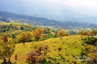 Selandia Baru? Bukan, Ini Cagar Alam Jantho di Aceh