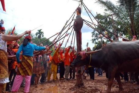 Tak Hanya Bali, Kalimantan Juga Punya Tradisi Bakar Mayat