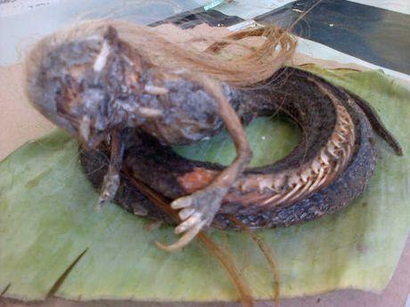 Foto ular yang berbentuk kepala manusia yang ditemukan di Aceh Utara