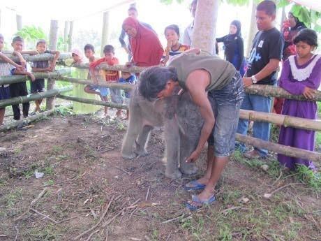 4 Gajah Tewas di Aceh, Wakapolri Dukung Lahirnya Komnas Perlindungan Hewan