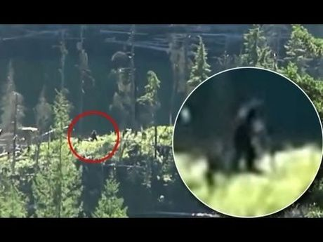 Sosok makhluk Bigfoot di hutan Kanada