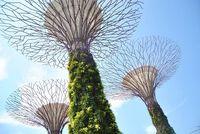 Corong besar penampung air hujan bergaya futuristis. Flower Dome. Sesuai namanya, kubah ini memuat berbagai tanaman bunga mulai dari benua Afrika, Amerika, hingga Eropa (Agus/detikTravel)
