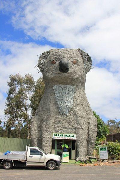 The Giant Koala, Australia