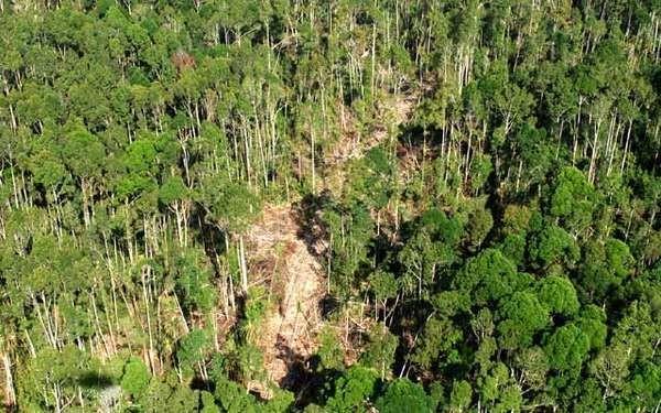 Gawat! Ribuan Hektar Kawasan Taman Nasional Tesso Nilo di Riau Dijarah