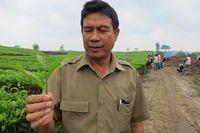 Kadis Tanaman Tobasari PTPN IV, Berlindo Saragih menunjukan pucuk daun teh Tobasari. Menurut dia perkebunan ini luasnya 590 hetar dan semuanya jenis teh hitam (Fitraya/detikTravel)