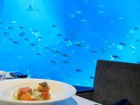 Ocean Restaurant berada di SEA Aquarium di Resorts World Sentosa, Singapura. Salah satu sisi restoran ini menghadap Open Ocean, sebuah akuarium raksasa dengan ketinggian mencapai lebih dari 30 meter dan lebar sekitar 8 meter (Afif/detikTravel)