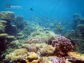Indahnya Kerajaan Bawah Air Kepulauan Karimunjawa
