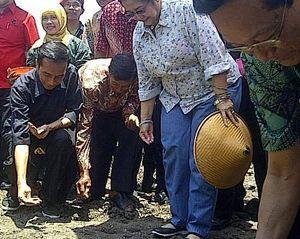 Ikut Tanam Kedelai di Bantul, Jokowi Jadi Sasaran Foto