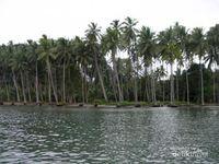 Rayuan Pulau Kelapa dari Maluku