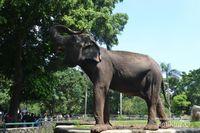 Tamasya Libur Sekolah ke Kebun Binatang Ragunan