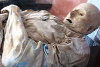 mumi alami