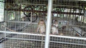 Kebun Binatang Ragunan Terima Sarimin Asal Berlabel Sehat dari BKHI