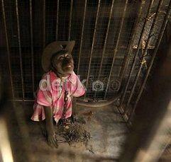 Ditolak Ragunan, Sarimin Bakal Dilepas ke Hutan