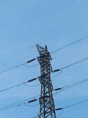 Warga Nyoblos di TPS, Pria ini Malah Panjat Tower SUTET di Senen