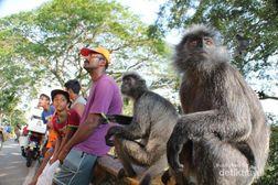 Nongkrong Bareng Monyet di Selangor
