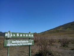Savana di Afrika? Bukan, Ini di Bromo