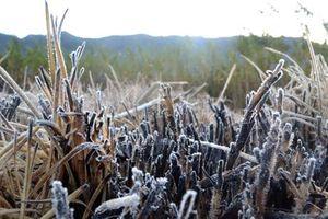 Fenomena Alam Menakjubkan Kristal Es di Dieng Hanya Muncul 3 Hari dalam Setahun