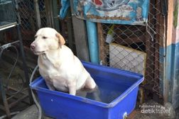 Bangkok Gerah, Anjing Pun Berendam