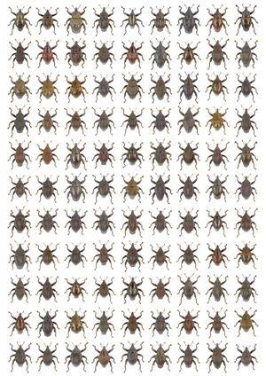 Wow! 98 Spesies Baru Kumbang Ditemukan di Indonesia