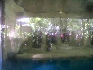 Menderita Radang Paru, Pinguin di Bonbin Yogyakarta Mati