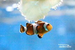 Terpesona Ikan-ikan Cantik di Sea World Ancol