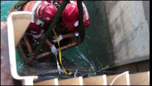 Ini Video Evakuasi Bangkai Hiu Paus Seberat 6 Ton di PLTU Paiton
