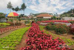 Weekend, Rekreasi Kebun di Lembang