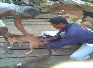 KLB Rabies di Kalbar, Korban Tewas Gigitan Anjing Bertambah Jadi 18 Orang