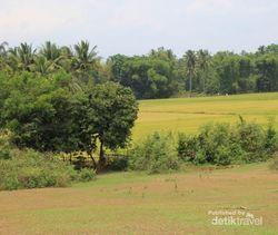 Sawah & Bukit Hijau di Glee Gapui, Aceh