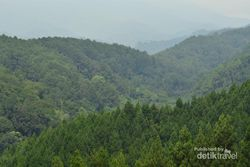 Mengenal Flora & Fauna di Pusat Pendidikan Konservasi Alam Bodogol