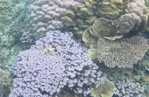 Bukti Keindahan Dunia Bawah Laut Karimunjawa