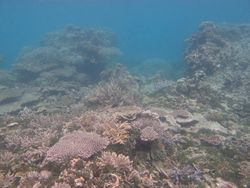 Seperti Ini 'Hutan' Bawah Laut Pulau Kecil, Karimunjawa