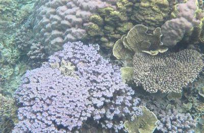 Catat! 4 Spot Snorkeling Favorit di Karimunjawa