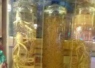 Ginseng Kualitas Top Korea, Baru Dipanen Setelah 6 Tahun