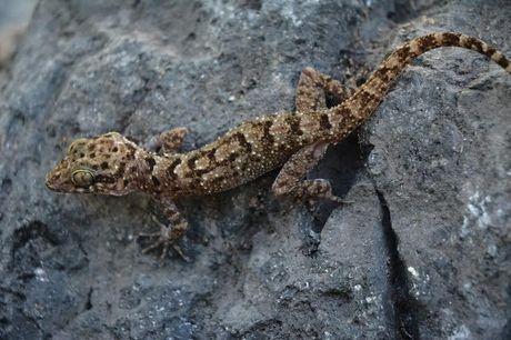 Ini 6 Spesies Baru Ditemukan di Tambora: Cicak Hutan hingga Kupu-kupu Malam - 2