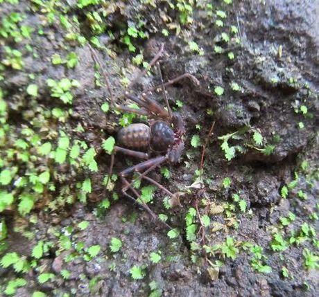 Ini 6 Spesies Baru Ditemukan di Tambora: Cicak Hutan hingga Kupu-kupu Malam - 6