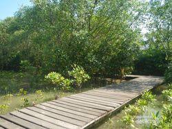Hutan Mangrove Wonorejo, yang Segar-segar di Timur Surabaya