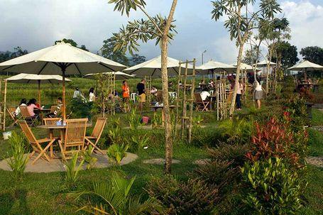 Refreshing di Alam Hijau dengan Mengunjungi Kebun Teh Kemuning