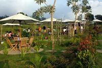 Ngeteh di Kawasan 'Puncak'-nya Jawa Tengah, Nikmat!