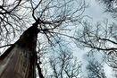 Terpesona Hutan ala Negeri Dongeng di Kendal